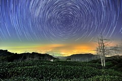 大崙山 ~茶園星軌~   Team farm startrails (Shang-fu Dai) Tags: light sky night clouds landscape nikon taiwan 南投 nightscene formosa 台灣 d800 雲海 茶園 teafarm 星軌 鹿谷 strails 銀杏森林 afs1635mmf4 武岫 大崙山觀光茶園