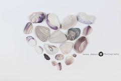 29/365 (JennaAbbottPhotography) Tags: sea shells seashells photography heart 365 365day 365dayproject
