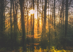 Winter Morning (KJ Photographie) Tags: morning trees winter light sky sun blur tree green leaves misty forest sunrise germany landscape deutschland licht nikon europa laub himmel grn landschaft sonne wald bagno bume morgen baum sonnenstrahlen mystisch burgsteinfurt blumenundpflanzen
