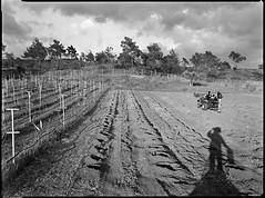 Drilling For Wine 2016 (Thodoris Tzalavras) Tags: blackandwhite bw landscape photography vineyard shadows cyprus cy 18x24 xrayfilm sironarn210mm rittreckview