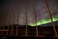 Borealis (victorvigo) Tags: naturaleza nature night landscape island iceland islandia nocturnal paisaje aurora geysir northernlights auroraborealis islanda