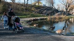 DSF15318 (howardzhang100) Tags: street city family newyork nature outdoor centralpark fujifilm classicchrome