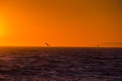 Sunset in Hermosa Beach (scaturchio) Tags: california sunset usa house beach golden pier fishing surf palmtree volleyball hermosa hermosabeach peir