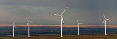 8 (Fibi's) Tags: energy wind xinjiang kanas windpower 2013 burqin tuannguyen tancuong fibiphoto nguyenngoctuan fibitravel