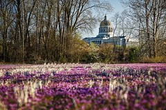 Henbit State Capitol (Notley) Tags: bridge sky architecture clouds rural march spring weeds weed dof purple depthoffield capitol missouri callawaycounty statecapitol bucolic capitolbuilding purpleflowers jeffersoncitymissouri henbit 2016 riverbottoms 10thavenue notley rurallandscape ruralphotography missouririverbottoms purpleblooms notleyhawkins callawaycountymissouri missouriphotography httpwwwnotleyhawkinscom notleyhawkinsphotography henbitblooms cedarcitymissouri