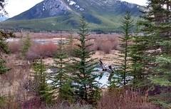 vermilion lakes (rana.way) Tags: vermilionlakes