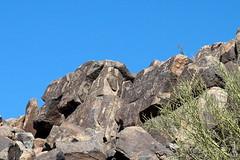 Hohokam Petroglyphs, Saguaro National Park, Arizona (mattk1979) Tags: park arizona usa art rock desert tucson native indian unitedstatesofamerica national american saguaro signalhill hohokam petroglyphs bajadaloopdrive