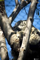 _DSC6017 (alessandro.spagnolli) Tags: zoo natura tamronlens naturalistica lecornelle parcofaunistico sonyalpha77