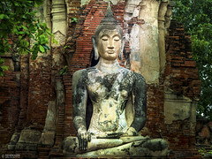 Historical Thailand (Ed Kruger) Tags: travel plants tree green history yellow statue thailand temple ruins asia southeastasia asians buddha buddhist culture thai historical wat copyrights allrightsreserved yey ayutthaya travelphotography watmahathat peopleofasia asiancities buddhistmonastery edkruger asiancountries thailandphotography cultureofasia templeofthegreatrelics photosofasia abaconda qfse kirillkruger rodkruger millakruger