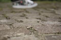 Adoquines (marieta.c) Tags: primavera desenfoque pies alemania suelo parada zapatillas quieto empedrado adoquin enfoque nikond7000 nikon18105f3556 mariendfield