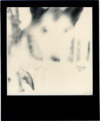Alder (R. Drozda) Tags: film alaska fairbanks sleddog alder beingthere polaroidsx70 instantfilm alaskahusky drozda impossibleproject littledoglaughednoiret roidweekspring2016