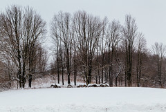 Bales in a snowy field (peaflockster) Tags: trees winter snow newyork nature countryside deciduous bales vscofilm