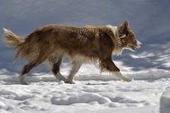 nikon D7200 (Rich de Tilly utilisateur Nikon) Tags: animal nikon attitude 300mmf4 animalier 300f4 d7200 nikond7200