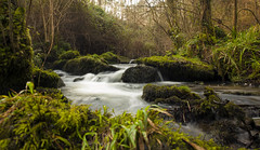 rio pinto (www.infografiagijon.es) Tags: naturaleza nature water rio canon river dark agua asturias bosque gijon xixon markii oscuridad asturies infografia astur eos5d hernancad wwwinfografiagijones