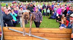 2016 Deans Marsh Festival
