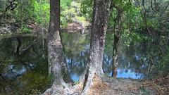 Wilderness Park (heytampa) Tags: park hiking sinkhole wildernesspark