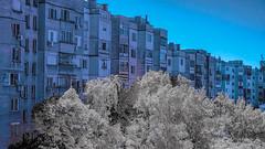 Infrared Tree 02 (Milen Mladenov) Tags: city blue trees white tree ir view infrared block