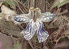 BugleweedDream (Bugldy99) Tags: photomanipulation manipulated surrealism surreal photomanipulated dreamscope fotomanipulated photosurrealism fotosurrealism