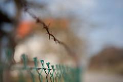 Upsy-daisy... (Hans-Franz) Tags: classic canon fence bokeh barbedwire 5d zaun stacheldraht clture fildeferbarbel sigma50mmf14art