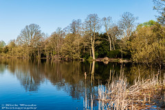 OstPk_DSC5534 (Nick Woods Photography) Tags: trees lake water landscape spring nt nationaltrust middlesex osterley freshwater osterleypark lakescene waterscape waterreflections waterscene springcolours treereflections nationaltrustosterleypark