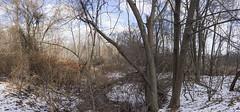 DSC07467NX5Na  Brook + Trees  2016 Paul Light (Paul Light) Tags: trees winter sky panorama nature landscape vines woods lexington massachusetts newengland panoramic photomerge brook minutemanbikeway reallyrightstuffpanokit