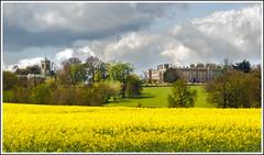 Castle Ashby Springtime 3 (Darwinsgift) Tags: castle field landscape nikon northamptonshire seed rape oil fields springtime ashby d810