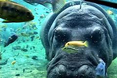 espo, el perro de la espi (branko_) Tags: underwater perro rhino lopez rhinoceros esperanza espo espi