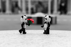Panda love (B&W) (Ballou34) Tags: red bw white black paris flower canon toy toys photography eos rebel panda flickr lego stuck royal plastic palais buren lov colonnes afol 2016 minifigures toyphotography 650d t4i eos650d legography rebelt4i legographer stuckinplastic ballou34