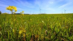 New energy (Akito-X) Tags: sky green nature sunshine de bayern deutschland spring natur himmel grn frhling windrder sonnenschein windmil canonefs1022mmf3545usm deining canoneos7dmarkii