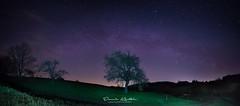 Tree under the Milky Way (Dennis Kirstein) Tags: longexposure sky tree nature night stars landscape nacht sony natur himmel astro galaxy astrophotography schwarzwald blackforest baum sterne nighshot milkyway milchstrasse astroscape