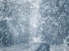 Winter (R_Ivanova) Tags: nature landscape winter snow tree textured outdoor rivanova риванова природа зима българия габрово bulgaria gabrovo monochrome сняг гора път