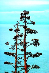 Tree Standing Proud (gec21) Tags: newzealand panasonic nz napier hawkesbay 2015 dmctz20