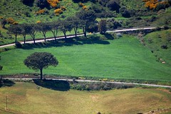 Granza (Antonio Ilardo) Tags: road trees italy green nature landscape nikon italia natura sicily sicilia italians madonie targaflorio