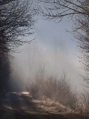 De nouveaux chemins à emprunter **--- °--° (Titole) Tags: chemin mist jura sublight titole nicolefaton framed branches thechallengefactory friendlychallenges gamex2