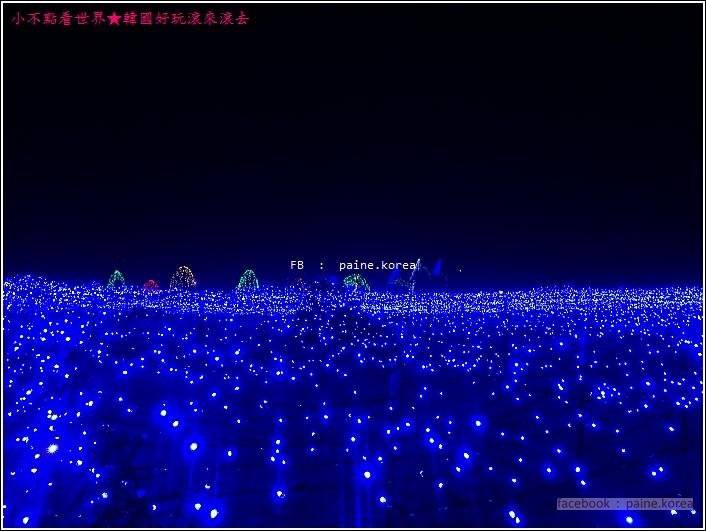 晨靜樹木園 五色星光庭園展 (11).JPG