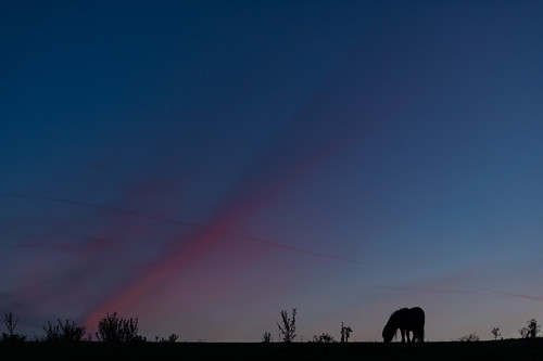 Horse and Blue Hour