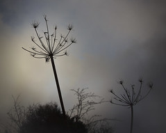 January Sky (Sheila's Scenes) Tags: ireland sky irish weather hope spring glow head january seed rebirth leaden skavanagh