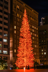 anticipating santa on christmas eve (pbo31) Tags: sanfrancisco california christmas plaza city eve boy urban panorama orange black color night dark season nikon holidays december large christmastree panoramic financialdistrict stitched 2015 555california boury pbo31 d810