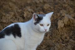 thea (ELENA TABASSO) Tags: cats animals cat gatto gatti animali animale