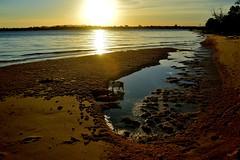 DSC_0068 (RUMTIME) Tags: light sunset dog nature queensland coochie coochiemudlo