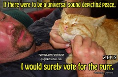 Universal Sound of Peace (youtube.com/utahactor) Tags: pink red orange yellow tom cat nose four mackerel ginger blog video peace tabby watch like follow whiskers zeus gato website sound kitties purr hd universal vote share facebook subscribe viral youtube friendsofzeusandphoebe