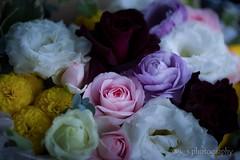 Flowers for my self (kenta_sawada6469) Tags: flowers plant flower color colors bouquet arrange