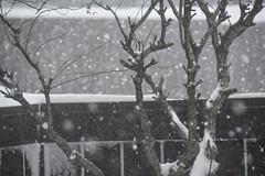 Lotsa snow! (Dotsy McCurly) Tags: snow nature beautiful yard fence lens snowflakes nikon nj blizzard 600mm d7200
