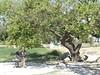 Hieropolis(13)