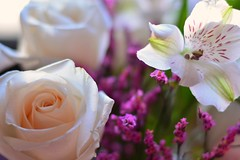 Blooms..... (Bubash) Tags: flowers roses petals day dof valentines blooms