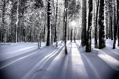 Rayonnant (Bruno MATHIOT) Tags: winter sun snow france tree nature forest canon season french soleil hiver wide sigma alsace neige rayon 1020 arbre fort saison 650d
