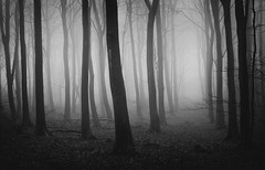 Tunnel Vision (Edd Allen) Tags: autumn blackandwhite bw mist fog forest sunrise woodland landscape countryside woods nikon country tunnel eerie ethereal serene melancholy eastsussex treescape bucolic friston fristonforest nocolour nikond610