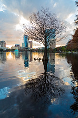Eola cypress (John Getchel Photography) Tags: lake reflection tree water skyline orlando cityscape florida cypress