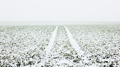 This Feeling for the Vastness of Space (panfot_O (Bernd Walz)) Tags: winter mist snow color field fog landscape space fineart calm minimal silence colorized fields rest agriculture minimalism acre snowscape contemplation emptyness transformedlandscape