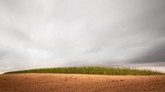 corn field (panfot_O (Bernd Walz)) Tags: longexposure color field clouds rural landscape countryside movement corn cornfield wind space colorized fields agriculture vastness transformedlandscape